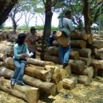 teak-wood-istanakayu (2)