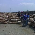 teak-wood-istanakayu (3)